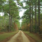 Harrietta Plantation - Late November Entering Property